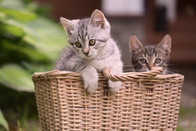 Picture Control Portrait — «Портрет»